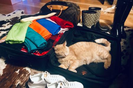 Confiez nous votre chat le temps d'un week-end