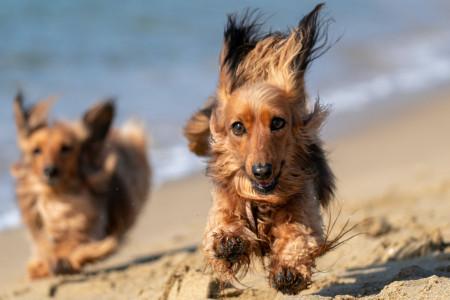 Partir en week-end avec son chien ? Toutes nos astuces pour un trajet zen !